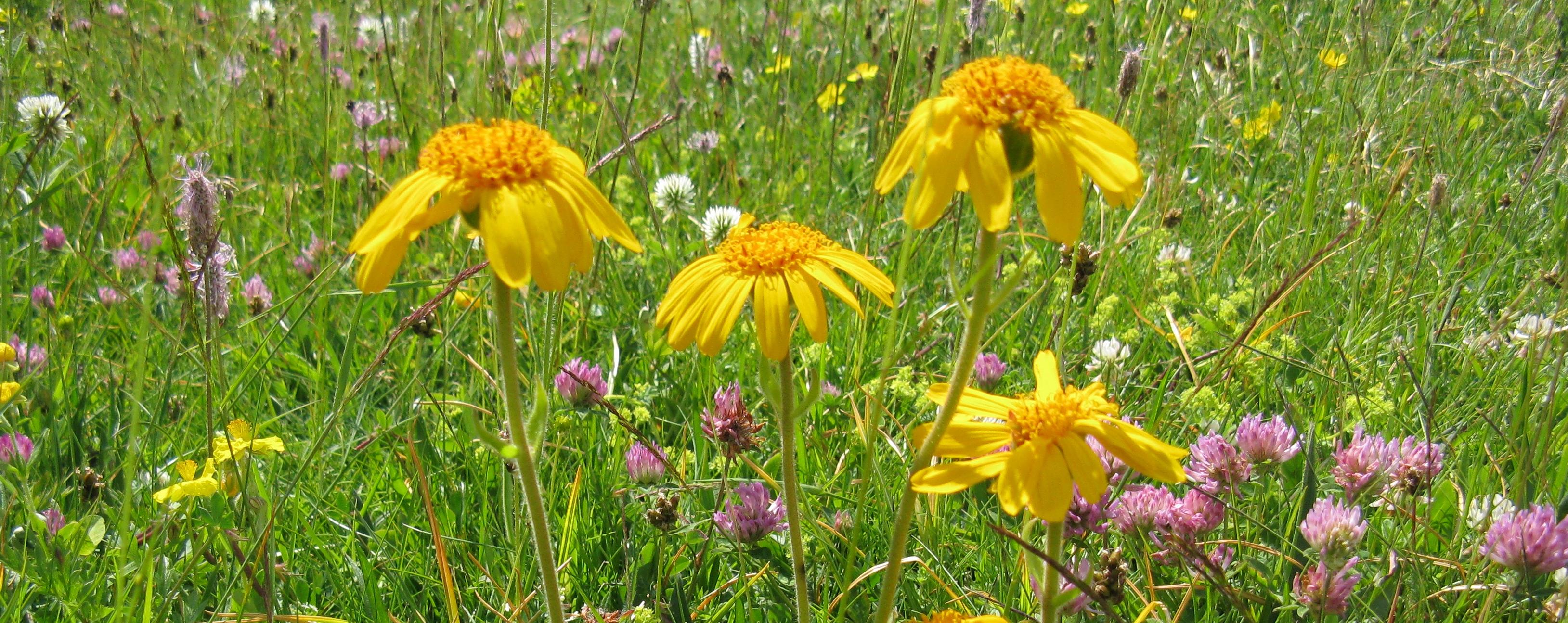 Immagini di confezioni di piante e fiori idee per for Piante e fiori